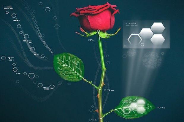 cyberplant_