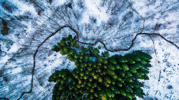 eerste plaats_nature