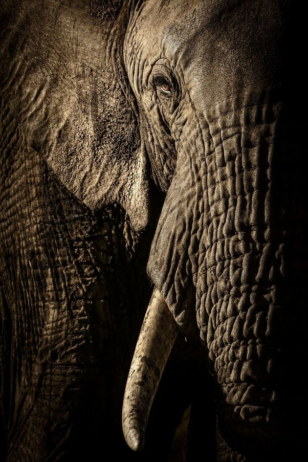 finalists-wildlife-photographer-of-the-year-2017-4-59ba29613e834__880
