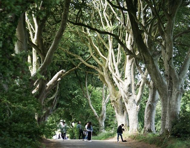 Game_of_thrones_Dark_hedges