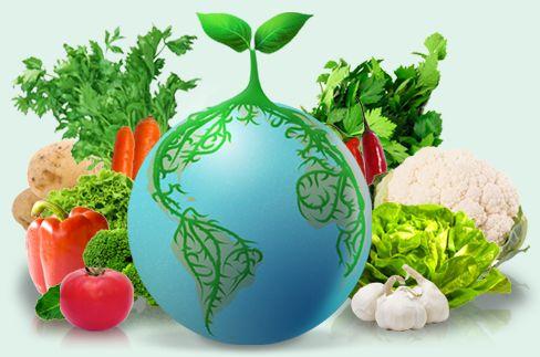 Grow the Planet: je eigen online moestuin