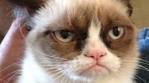 Grumpy Cat en Bob de Boxer populair op Social Media