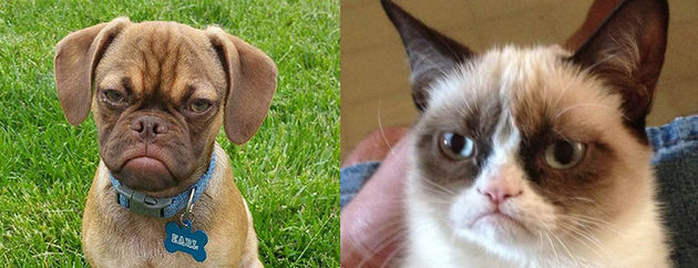 grumpy-dog-cat