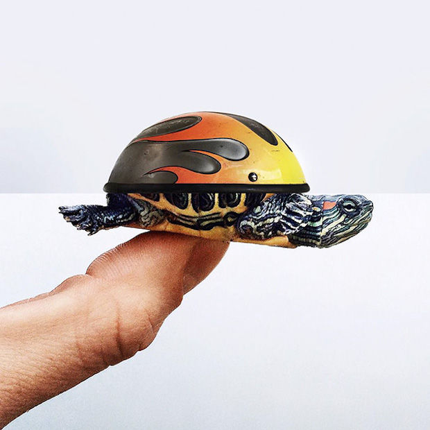 helm+schildpad