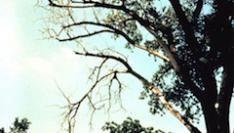 Is WiFi slecht voor onze bomen en planten?