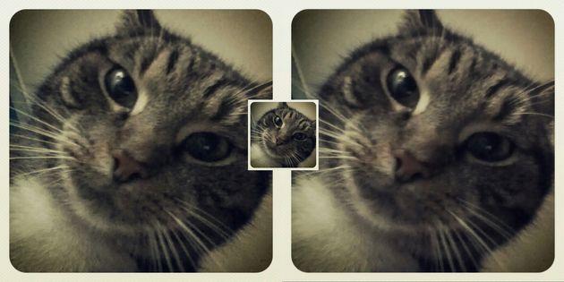 kat-enhance-verschil-2