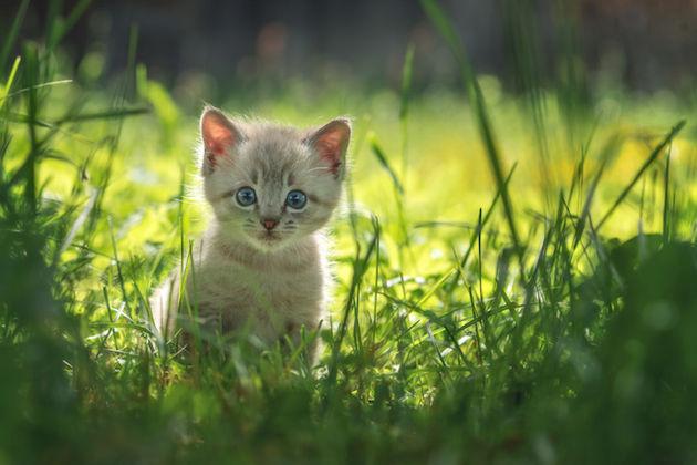 kattenfilmpjes-vrolijk-onderzoek-kitten