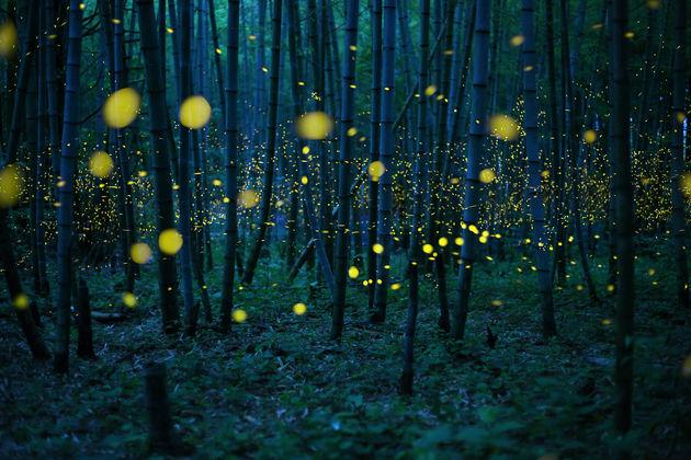 Kei_Nomiyama_Japan_Shortlist_Open_Low-Light_2016