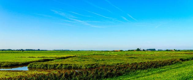 nederland-dekking