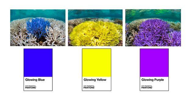 pantone-coral-examples-1-2019