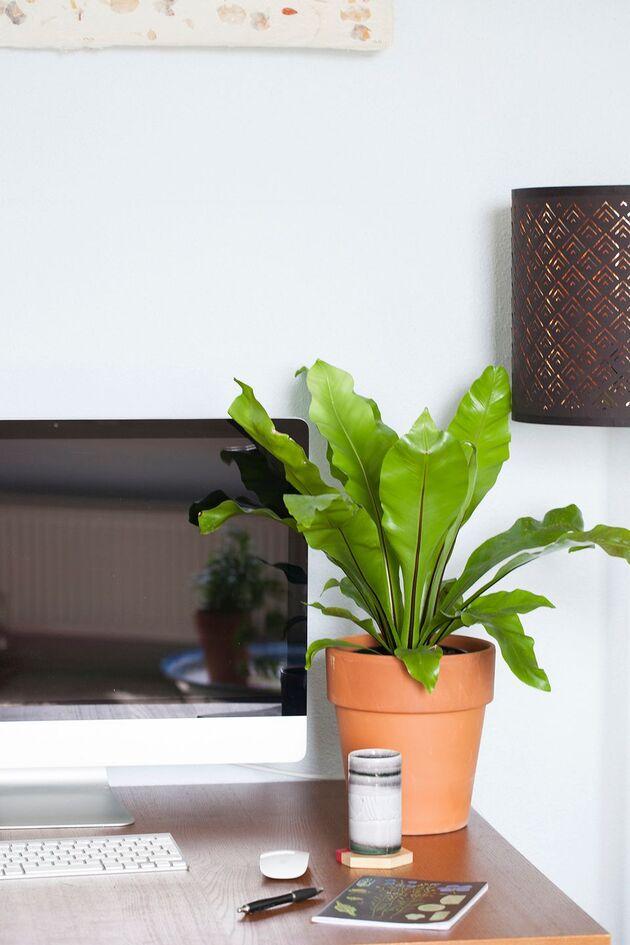 plant-thuiskantoor