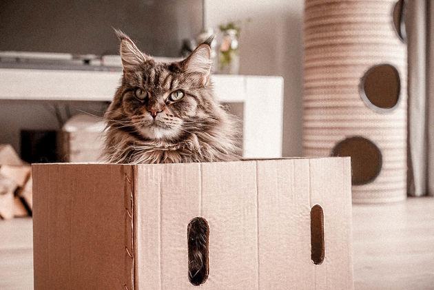 Poezenbazen-webshop-voor-katten