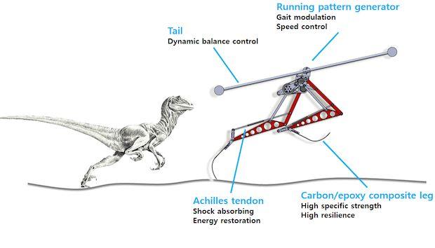 Rennende robot, geïnspireerd door Velociraptor, haalt 46 km/u