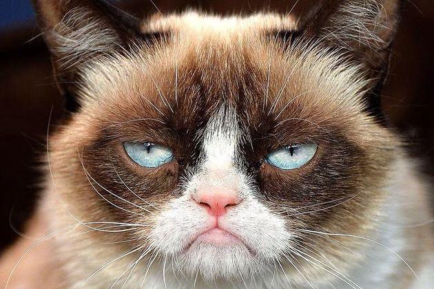 SXSW: Kat in het bakkie: geld verdienen met kattenvideo's