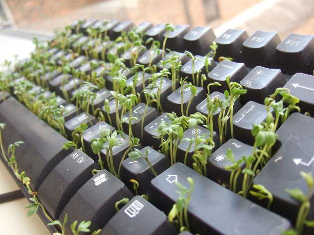 toetsenbord-plant