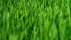 """Top 50 """"best global green brands"""""""