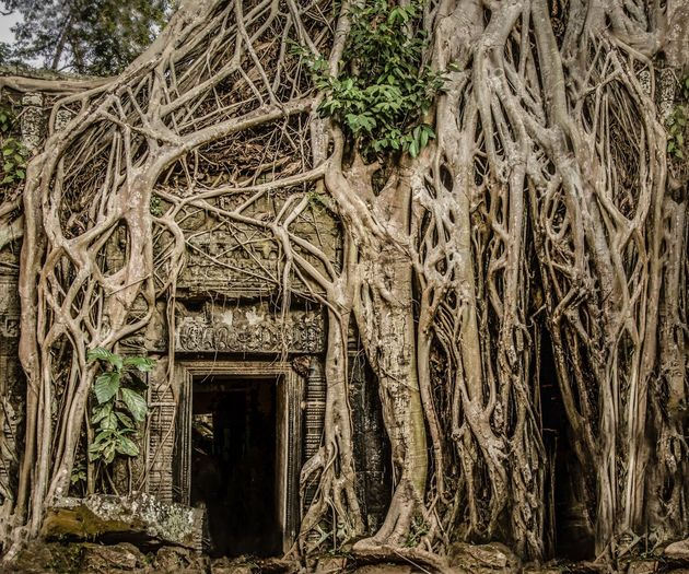trees-take-over-the-temples-at-angkor-wat-by-kira-morris