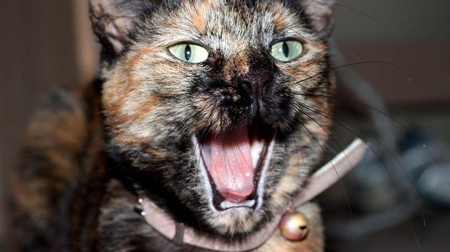 Waarom het internet van katten houdt [Infographic]