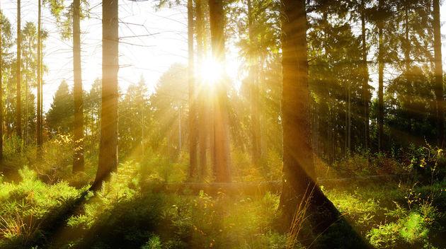 Warmste-jaar-ooit-2015