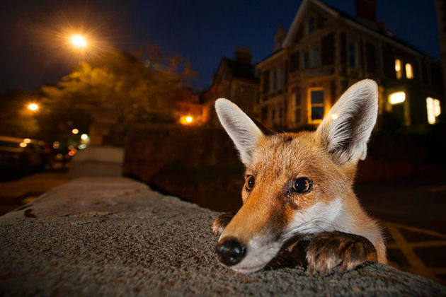 wildlife-photographer-of-the-year-2016-national-history-museum-10-57c824cc75d22__880