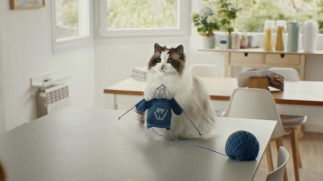 Wunda - Cat - knitting