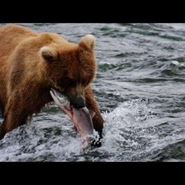 Weekend Viral : Alaska - Uncharted Waters