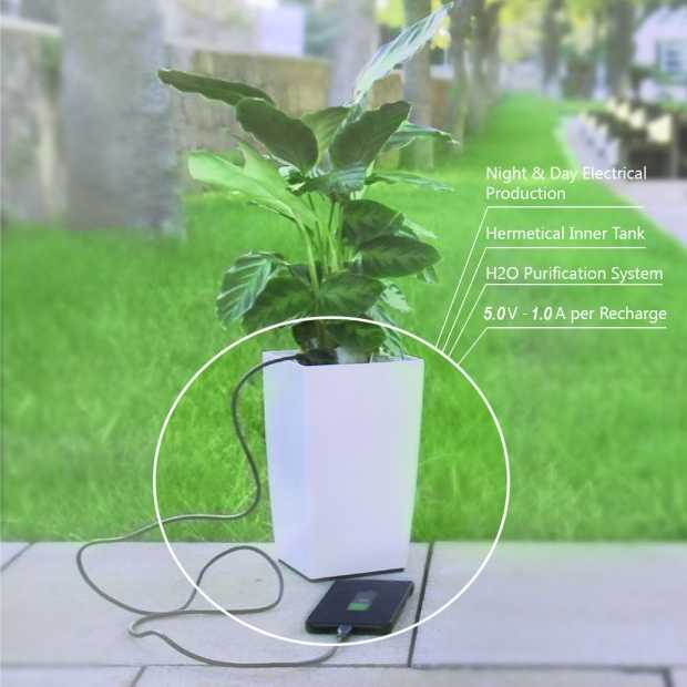 Je smartphone opladen met een plant!