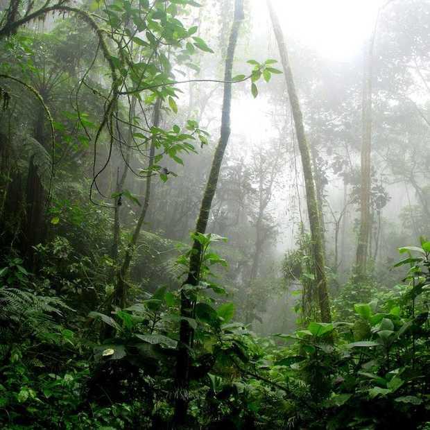 De Amazone staat in brand en daarover wordt veel gedeeld op social media