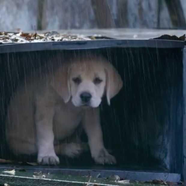 Budweiser's puppy commercial gaat viral!