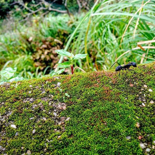 Utrechtse groene bushokjes groot succes