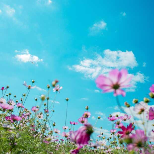 Heerlijk, het is lente!