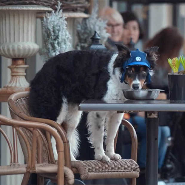 Going viral: Connected Dog