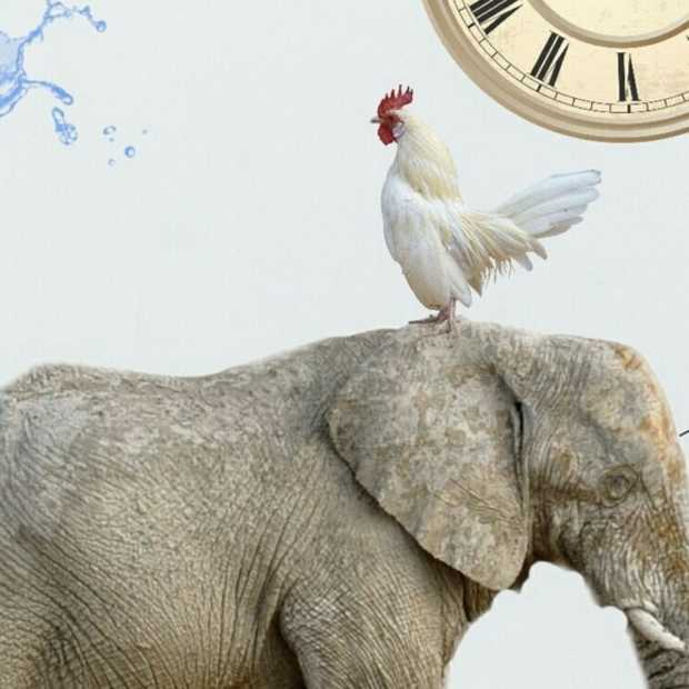 Het Don't think of an elephant momentje van Thierry Baudet