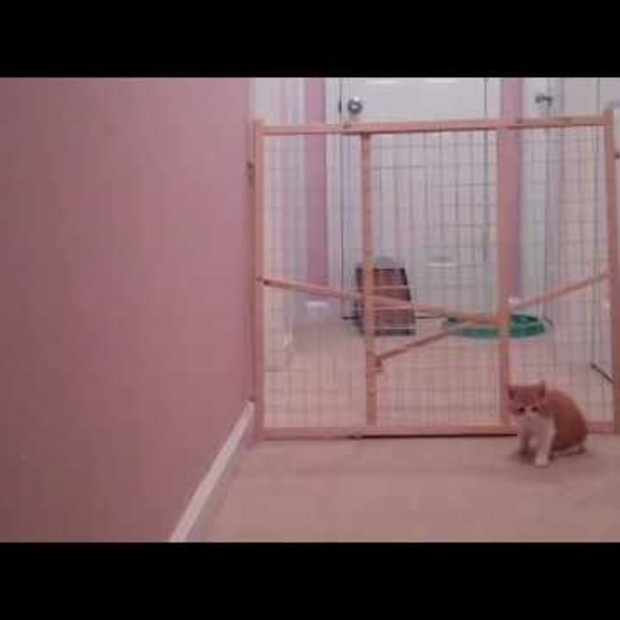 Going Viral: Double Escape Starring Pumpkin and Squash
