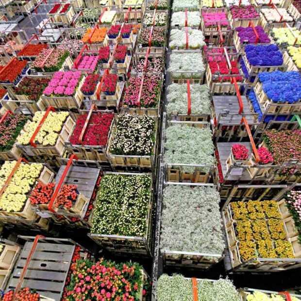 Dutch Flower Group vereenvoudigt online inkoopproces