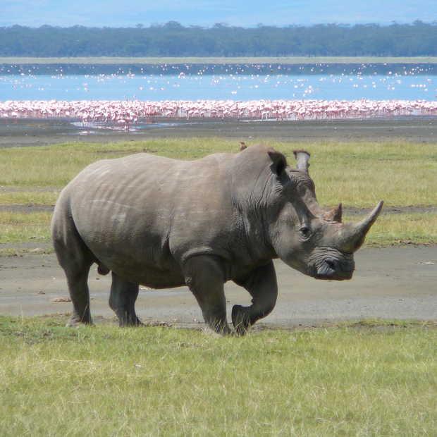 Foto's op sociale media leiden stropers naar bedreigde diersoorten
