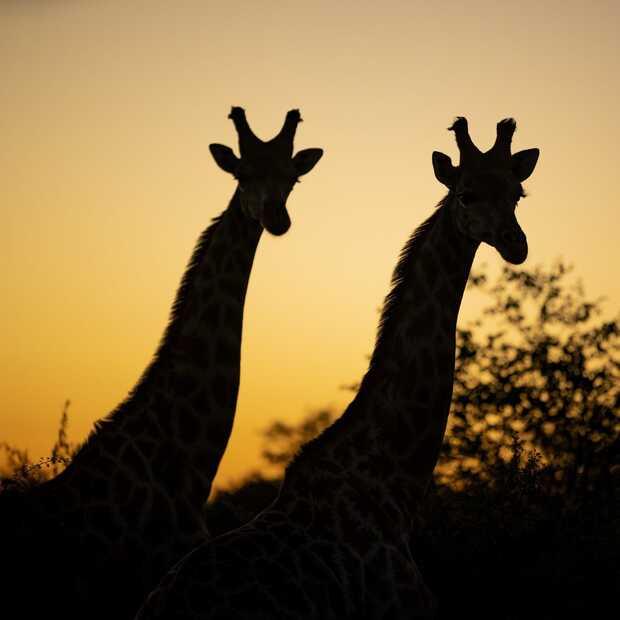 Central Tuli is het eerste slimme wildpark in Botswana