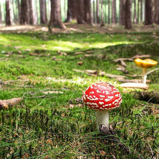 Goed Nieuws: keisterke paddestoelen, Game of the Year, LEGO Disney en Kerstgezel.nl