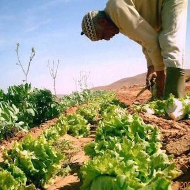 Vanaf nu groente en fruit telen in de woestijn