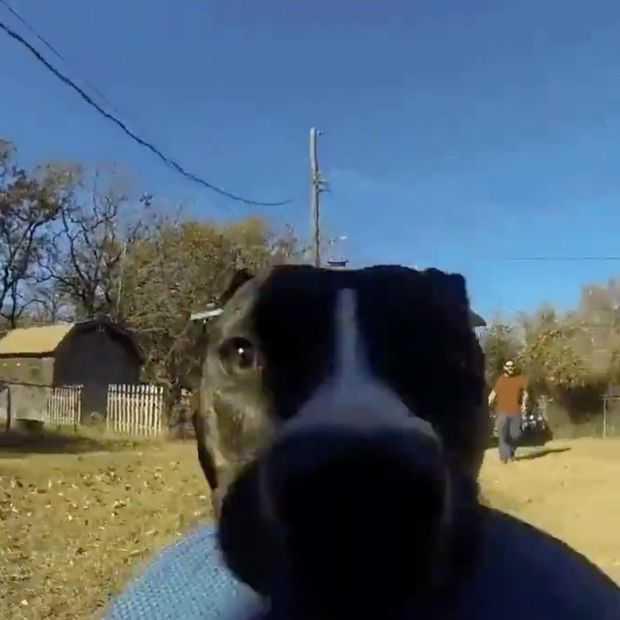 Viral video: hond pikt GoPro en filmt hilarische achtervolging