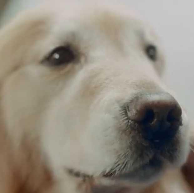 Bizar: hondenbaas betaalt 6 miljoen  voor Super Bowl-commercial
