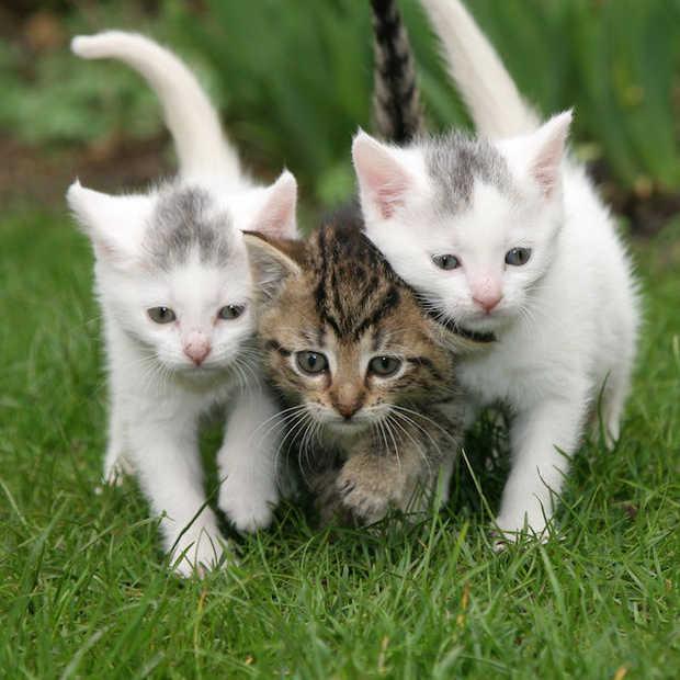 Top 25 leukste kattenfilmpjes op internet