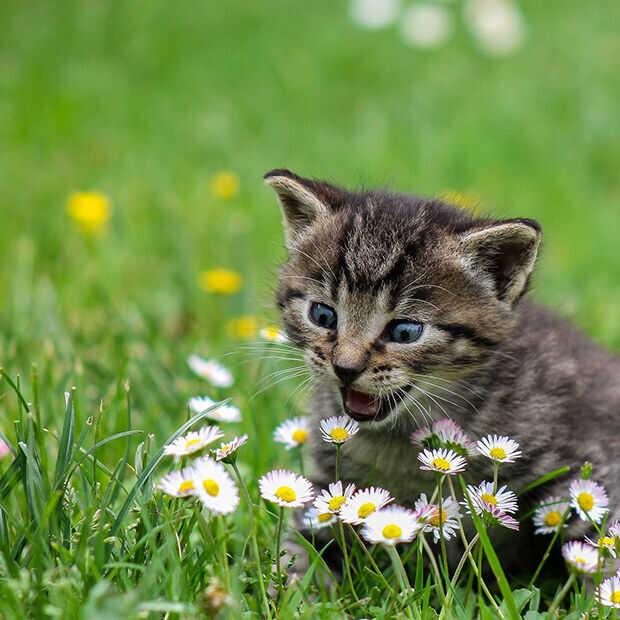 Goed nieuws: 'kat' blijkt bedreigde diersoort, autobatterij opgeladen in 5 minuten en Bernie memes