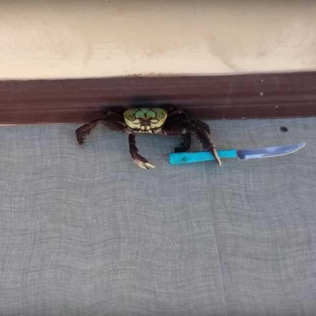Krab valt voorbijganger aan met mes