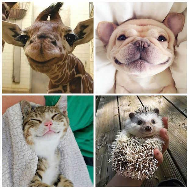 De 16 meest schattige foto's van lachende dieren