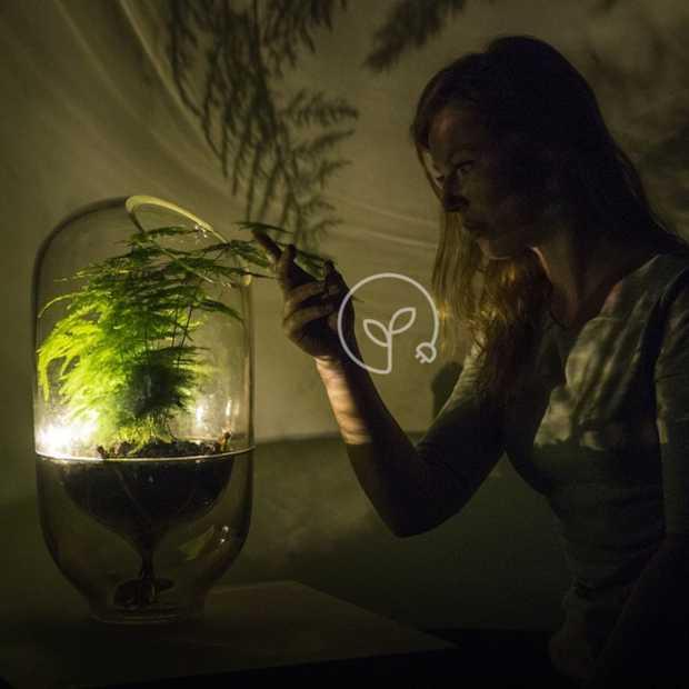 Living Light: deze lamp haalt z'n energie uit een plant