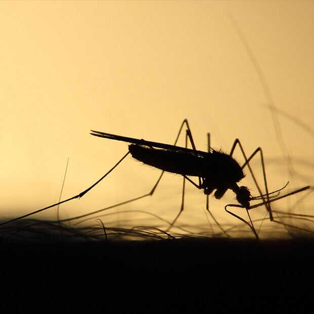 De mooiste wereldmalariadag ooit: het malariavaccin is dichtbij