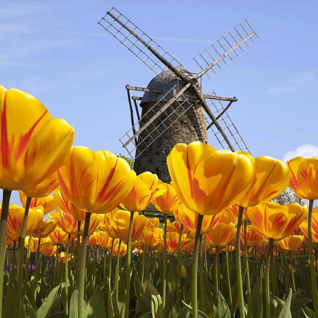 André van Duin is het sterkste merk van Nederland