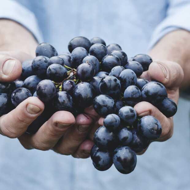 Drink vandaag een rood wijntje: het is Malbec World Day
