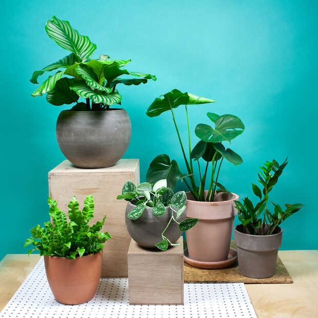 We zijn allemaal op zoek naar planten voor ons thuiskantoor